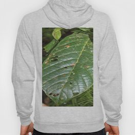 Large tropical leave from El Verde - El Yunque rainforest PR Hoody