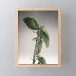 Basil in morning light Framed Mini Art Print