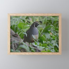 mr quail Framed Mini Art Print