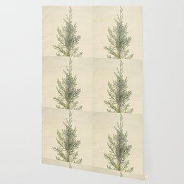 Botanical Juniper Wallpaper