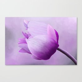 Painting of an Anemone flower Canvas Print