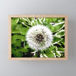 Dandelion More Than A Weed Framed Mini Art Print