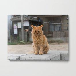 Wild ginger cat on Ogijima island in Japan Metal Print