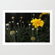 Spring - Chrysanthemum Art Print