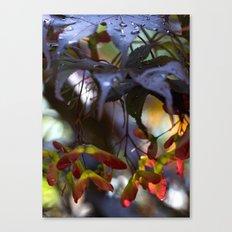 Japanese Maple Seeds III Canvas Print