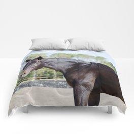 Beautiful in Blac Comforters