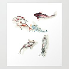 Koi Fish Watercolour Art Print