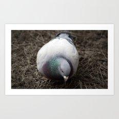 Pidge Art Print