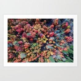 FOREST - AUTUMN - COLORS - PHOTOGRAPHY - NATURE Art Print