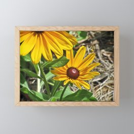 Black-eyed Susans and a Busy Bee Framed Mini Art Print