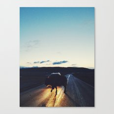 Bison in the Headlights Canvas Print