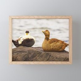 Mr and Mrs Eider Framed Mini Art Print