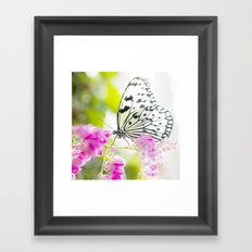 White Butterfly Framed Art Print