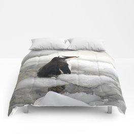 Gentoo Penguin in Ice Comforters
