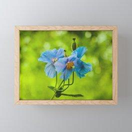 Blue Poppies Framed Mini Art Print