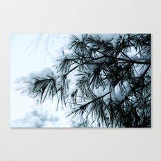 Snow Laden Pine - A Winter Image Canvas Print