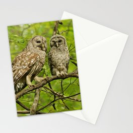Mom and baby barred owl Stationery Cards