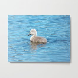 Baby Swan Metal Print