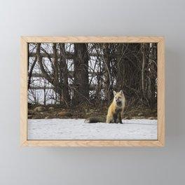 Beautiful Red Fox - No. 4 Framed Mini Art Print