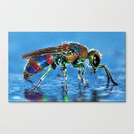 Multi-colored Cuckoo Wasp Portrait #4 Canvas Print