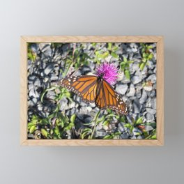 MONARCH BUTTERFLY ON FLOWER Framed Mini Art Print
