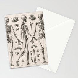 1857 Diagram Anatomy including Skeletons Stationery Cards