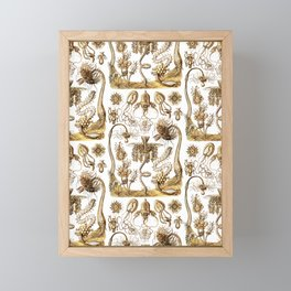Ernst Haeckel - Tubulariae Framed Mini Art Print