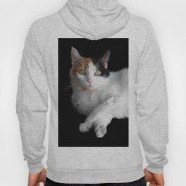 Calico Cat on Black  Hoody