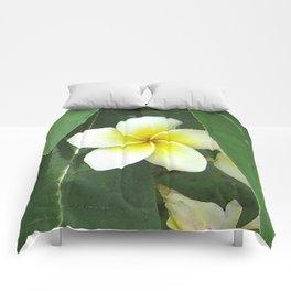 Plumeria Extreme Comforters