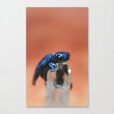 Blue Dragon sculpture photograph Canvas Print