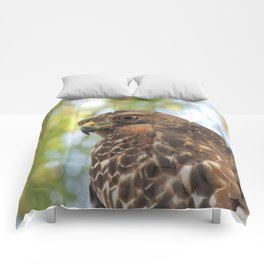 Young Red-Shouldered Hawk in a Desert Willow Comforters