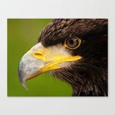 Intense Gaze of a Golden Eagle Canvas Print