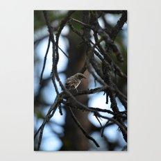 Sweet Sparrow Canvas Print