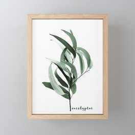 Eucalyptus - Australian gum tree Framed Mini Art Print