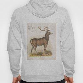 Vintage Illustration of a Round Horned Elk (1872) Hoody