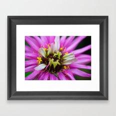 Macro Violet Flower Framed Art Print