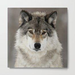 Winter Wolf Metal Print