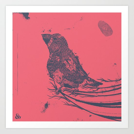 Finch Origin of Species Art Print