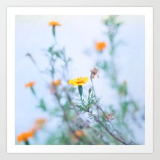 Where Bashful Flowers Blow Art Print