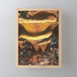 Fungi forage #10 Framed Mini Art Print