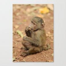 Lil' Baboon Canvas Print