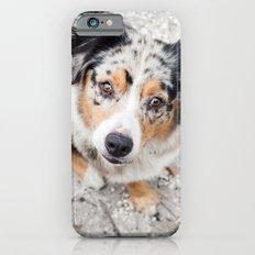 Australian Shepherd iPhone 6s Slim Case