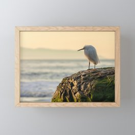 Young Egret Framed Mini Art Print