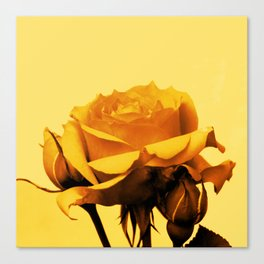 Vintage Yellow Rose and buds Canvas Print
