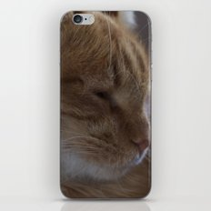 Nap Time iPhone & iPod Skin