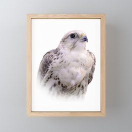 Up Close and Personal with a Stunning Saker Falcon Framed Mini Art Print