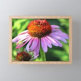 Cone Flower or Echinacea in Horicon Marsh Framed Mini Art Print
