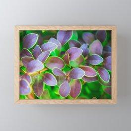 Vibrant green and purple leaves Framed Mini Art Print