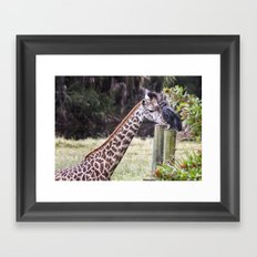 An Unlikely Couple Framed Art Print