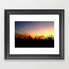 Sunset Reeds Framed Art Print